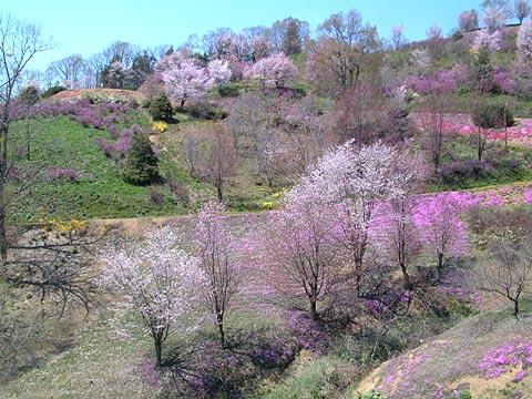 2005年5月22日の気まぐれ桜旅日...