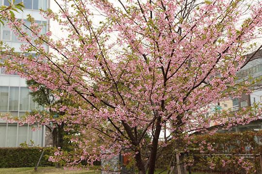 東京 工業 大学 附属 科学 技術 高等 学校